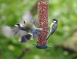 Birds on feeder.