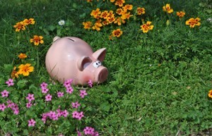 pink piggy bank in garden