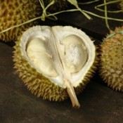 Using Durian