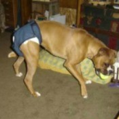 Homemade Dog Diapers