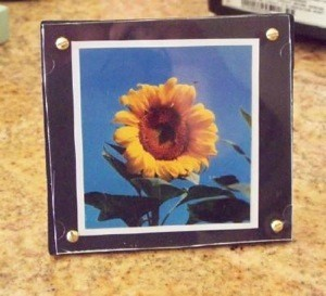 framed sunflower photo