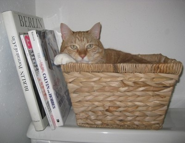 Cat in basket on shelf.