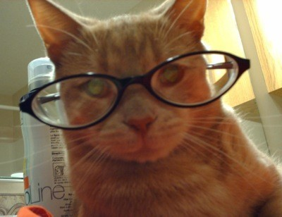 Tigger in reading glasses.
