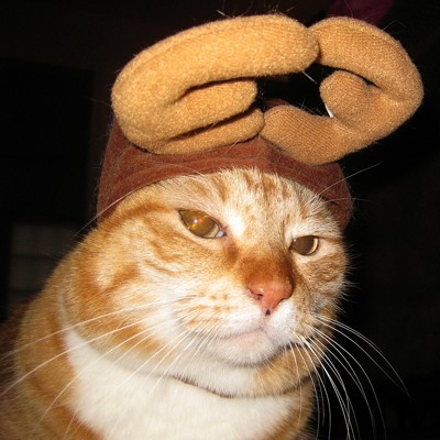Cat wearing hat with antlers.