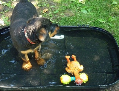 Axlee in shallow pool with toys.