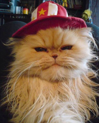 Cat with red and white hat.