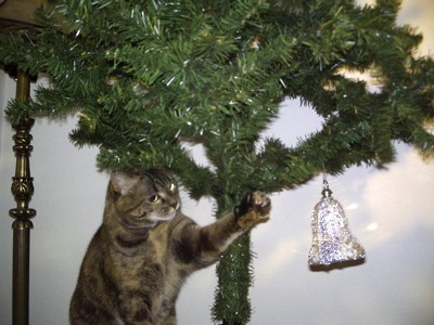 cat with christmas tree
