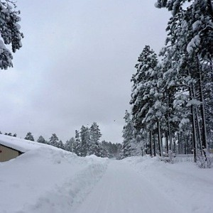 Winter (Pinetop, AZ)