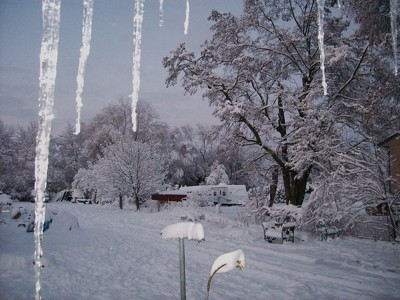 Snowy trees with icicles in foreground.