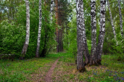 Best Plants Under A Pine Tree : When looking for plants to grow under pine trees there are several