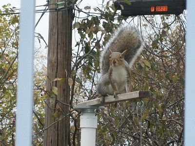 Squirrels On Birdfeeders