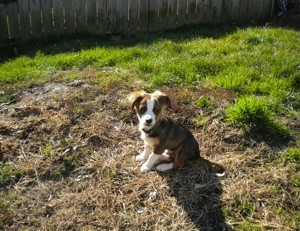 Puppy in yard.