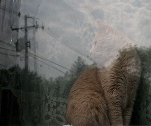 Cat seen through a window.