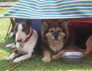 Two dogs under a cover with water bowl.