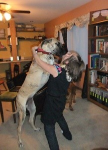 Great Dane standing on hind legs