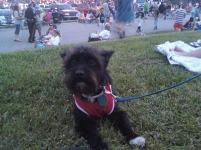 Toto (Cairn Terrier)