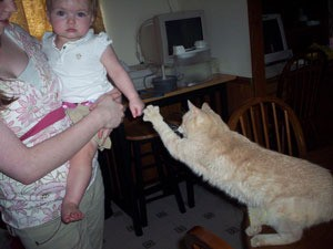 Tabby cat reaching out with paw towards child.