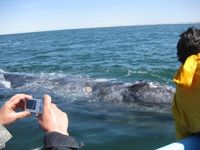 Person taking a photo of a whale.