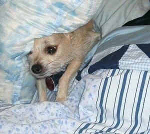 Chalupa under the pillow.