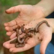 Getting To Know Earthworms