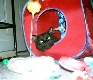 Black cat in fabric cube.