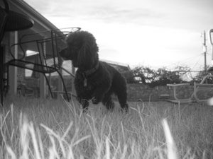 black and white photo of Chucha