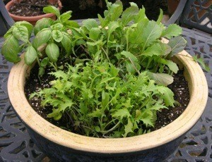 Salad bowl planter.