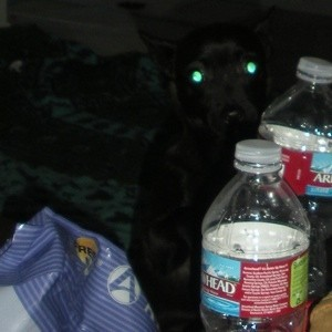 Black dog and water bottle.