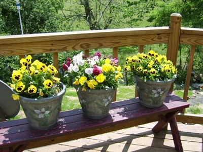 Pansies in pots on deck.
