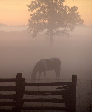 Filly on a foggy morning.