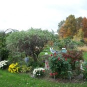 Garden with autumn trees in background.
