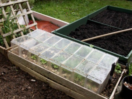 VHS Cases For Seedlings