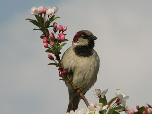 Bird on flowering branch.