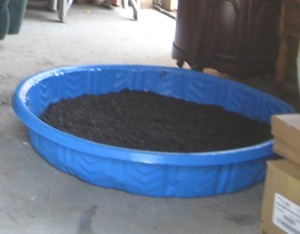 Start Seeds in a Kids Swimming Pool