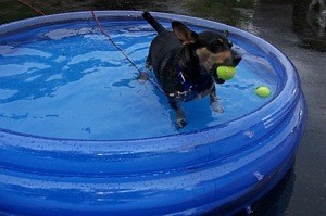 Dog in wading pool wtih tennis balls.