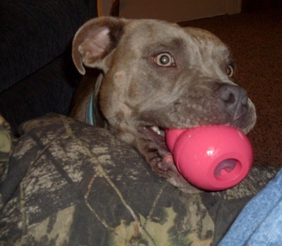 Daisey with her Kong.