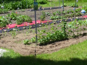 Red tablecloths over soil.