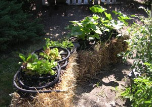 Straw Bales For Gardening