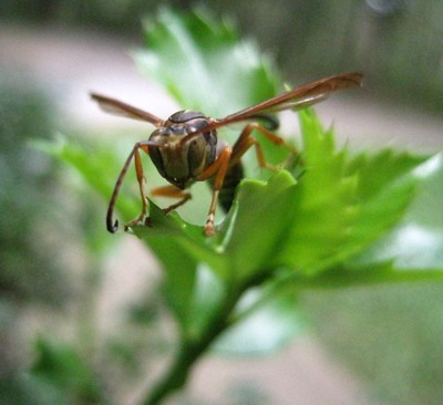 A wasp on a leaf.