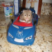 hamster in toy car