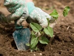 Weeding tips and tricks thriftyfun - Weeding garden make work easier ...