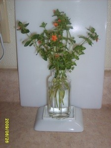 Cut stems in vase, with orange flowers.