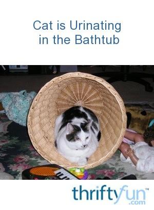 peeing in bathtub Cat