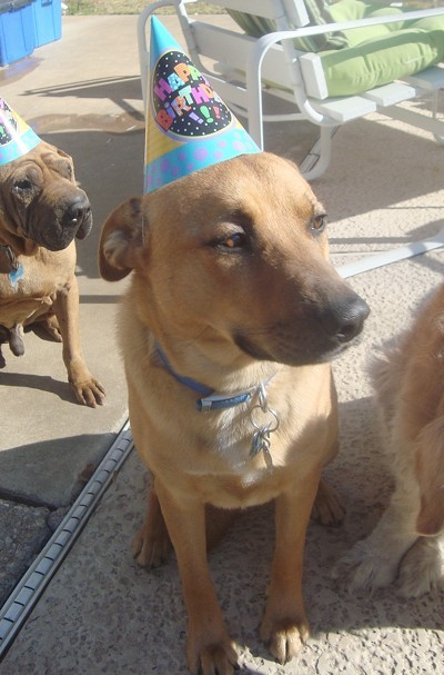 Jax wearing a birthday hat.