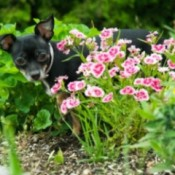 5 Tips To Make Your Pet More Green