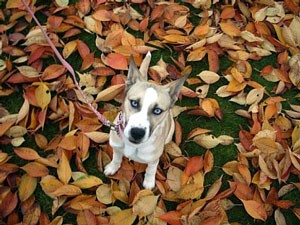 dog on leaves in the yard