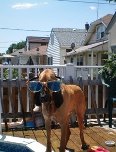 bloodhound with glasses