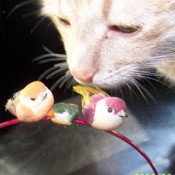 Cat Sniffing Birds