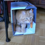 Cat in a box.