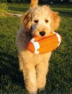 Dog with football.
